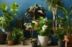 Bloomscape plants