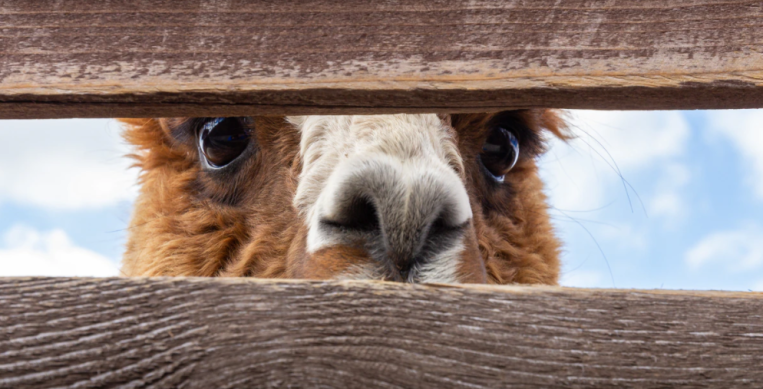 Alpaca raises $10M Series A for its API-powered equities trading service