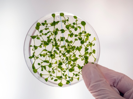 MIT develops method for lab-grown plants that eventually lead to alternatives to forestry and farming -