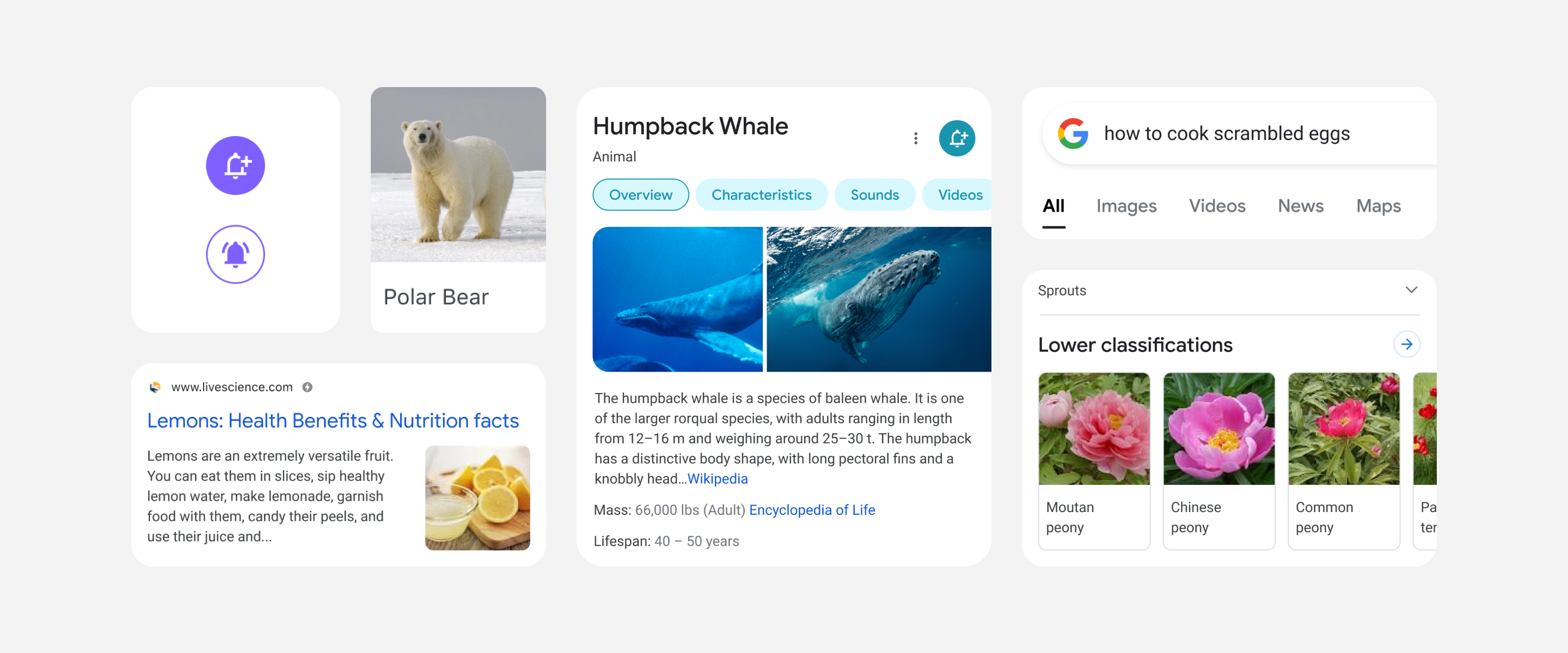 Google refreshes its mobile search experience