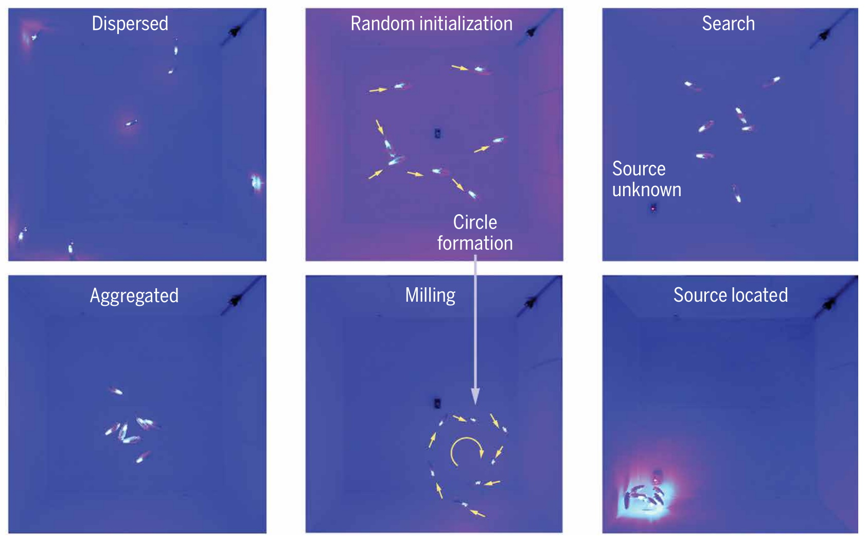 "Images showing how ""bluebots"" swarm intelligently and find each other."