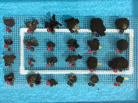 Coral vita imgs 1