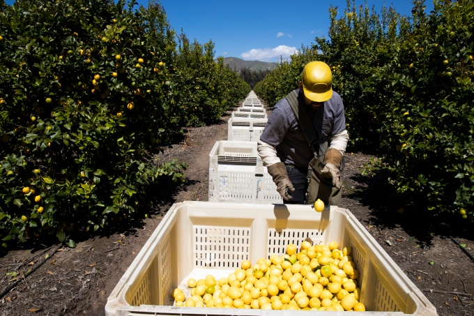 SESO Labor is providing a way for migrant farmworkers to get legally protected work status in the U.S. – TechCrunch GettyImages 1208478159