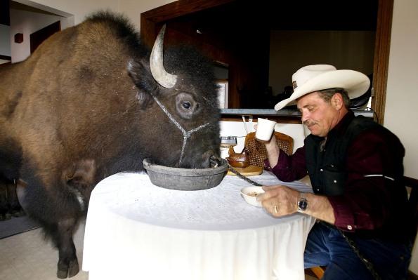 Investors eat up Orbillion Bio's plans for lab-grown Wagyu beef, elk and bison