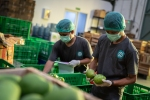 Two people packing fresh produce at a TaniHub group warehouse in Indonesia