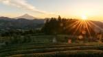 Sunrise view of Mount Fuji from tea plantation, Shizuoka, Japan
