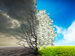 Image of a tree in a field, with half barren to represent debt and half flush with cash to represent success.