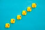 Rubber ducks in a line