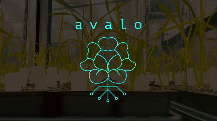 Avalo uses machine learning to accelerate the adaptation of crops to climate change – TechCrunch