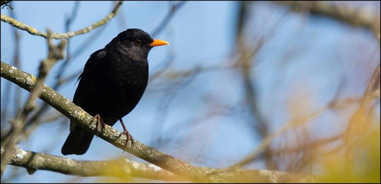 Blackbird.AI grabs $10M to help brands counter disinformation