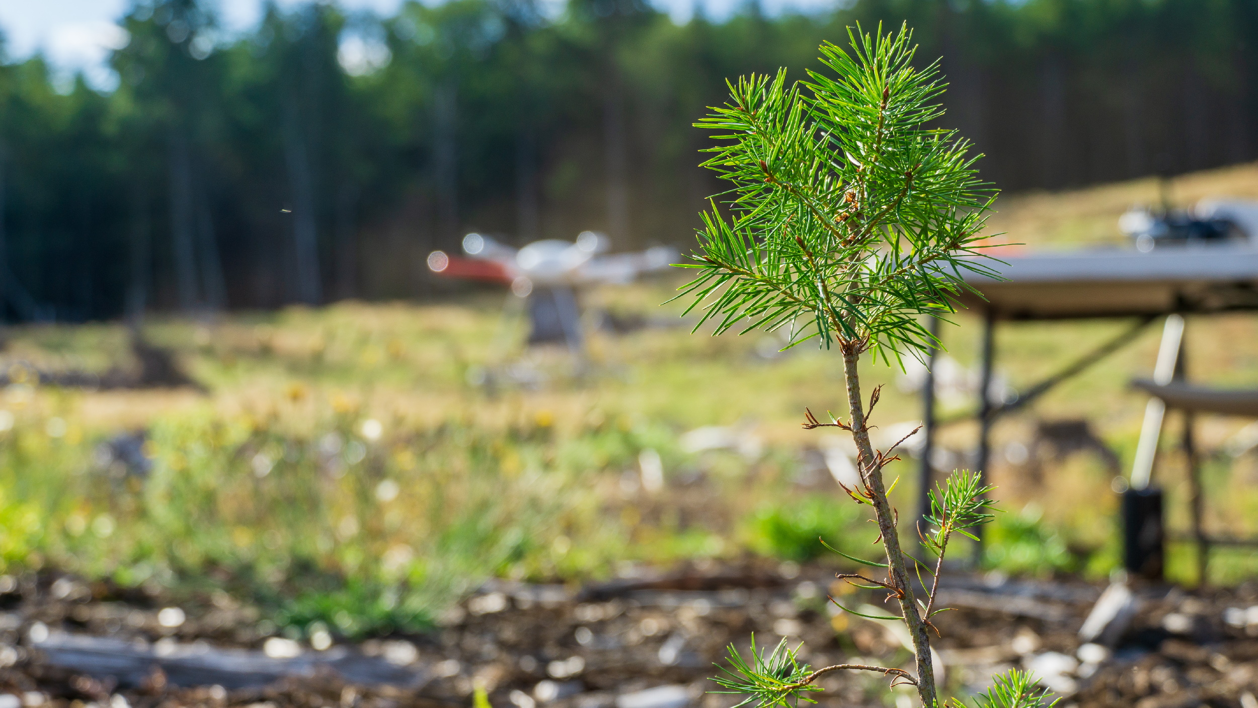 A tree seedling and a drone sitting behind it.